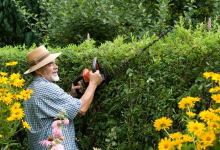 How To Cut Hedges - Northside Tool Rental